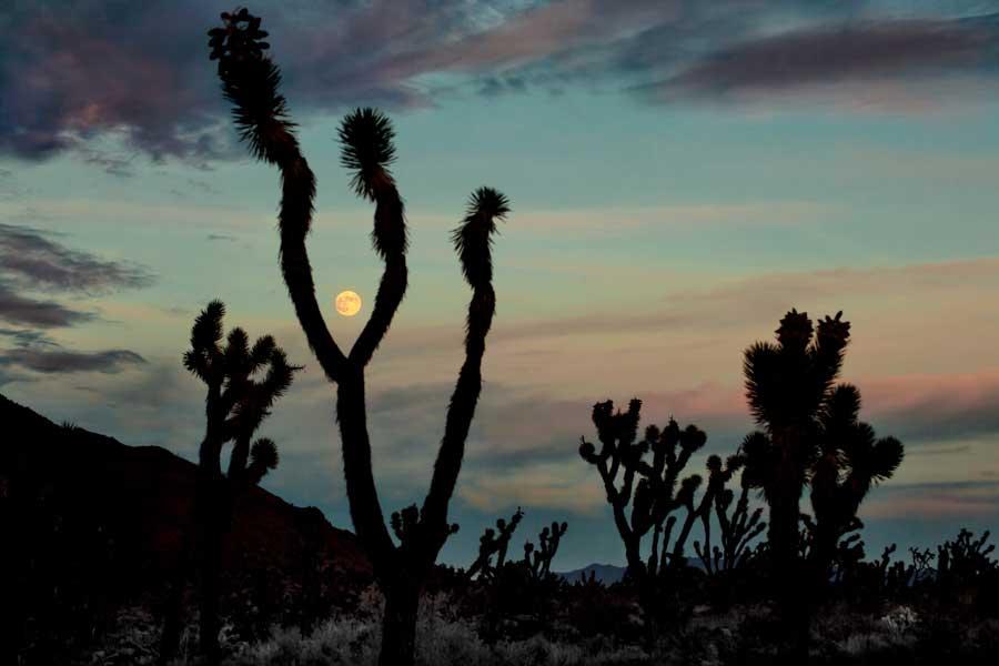 Night photography / Tom Lowe Joshua Sunset