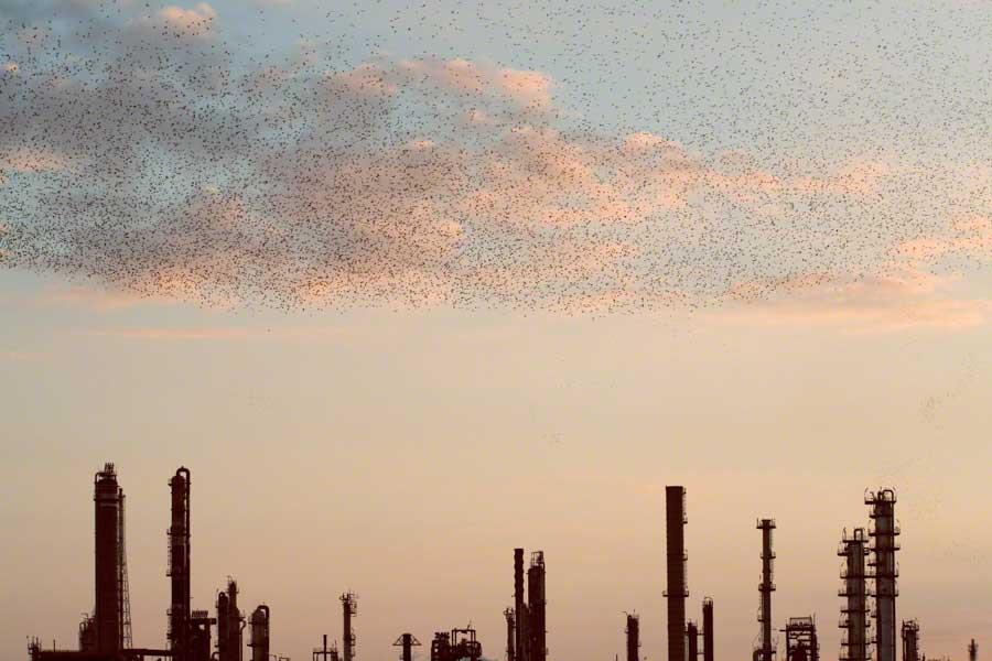 Refinery Flocks 10, 2006 Massimo Cristaldi