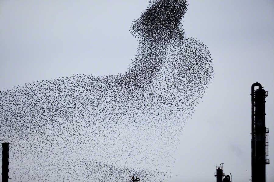 Refinery-Flocks-Blue-01-Edit Massimo Cristaldi