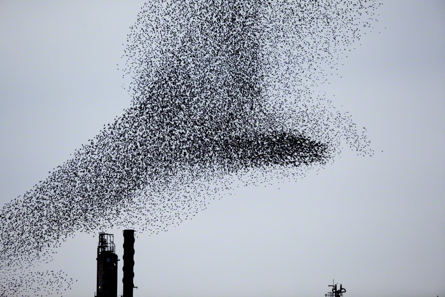 Refinery-Flocks-Blue-04 Massimo Cristaldi