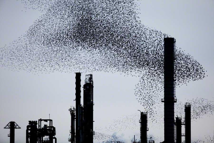 Refinery-Flocks-Blue-05 Massimo Cristaldi