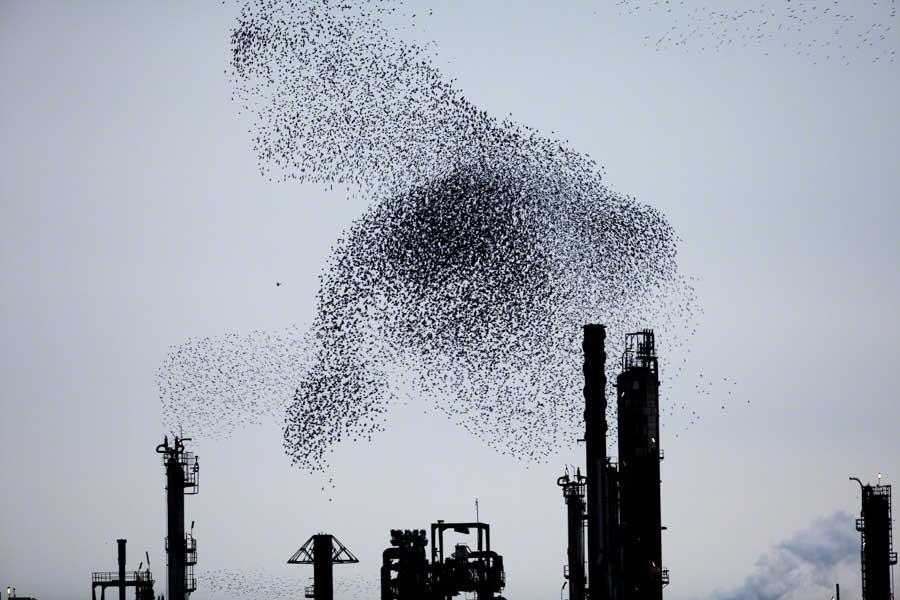 Refinery Flocks 8, 2009 Massimo Cristaldi
