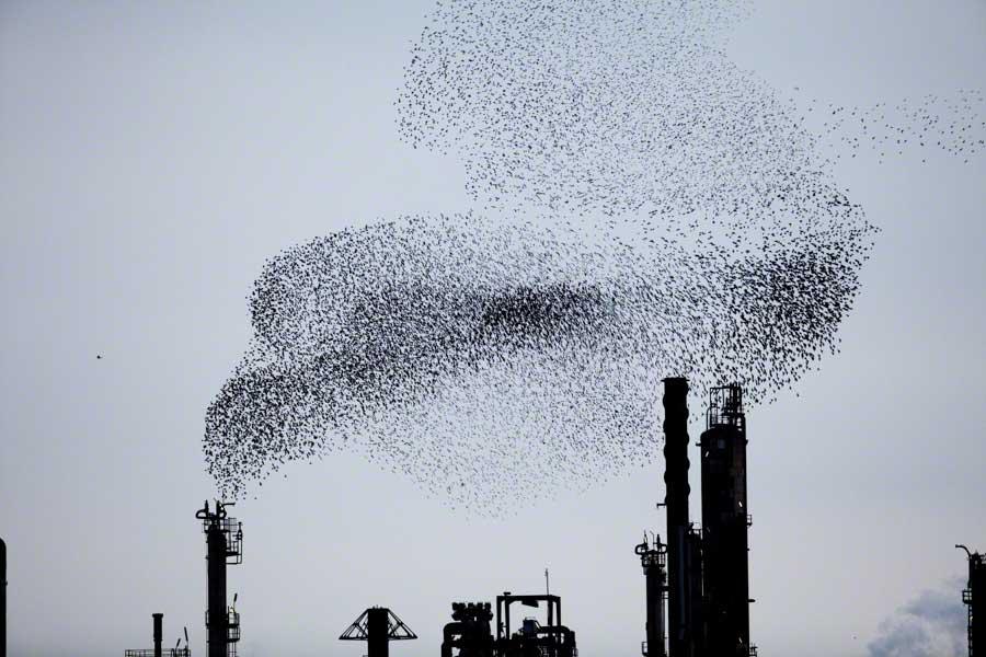 Refinery Flocks 9, 2009 Massimo Cristaldi