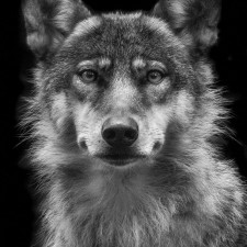 photography of animals / Wolf Ademeit