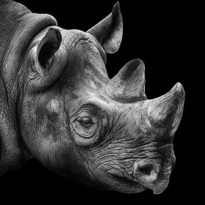 rhino_portrait photography of animals / Wolf Ademeit