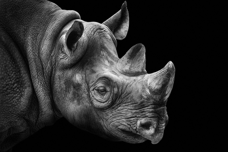 Rhino portrait photography of animals wolf ademeit