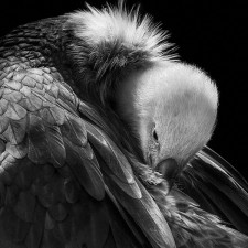 the_vulture photography of animals / Wolf Ademeit