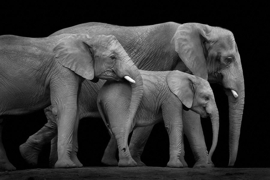 three_elephants
