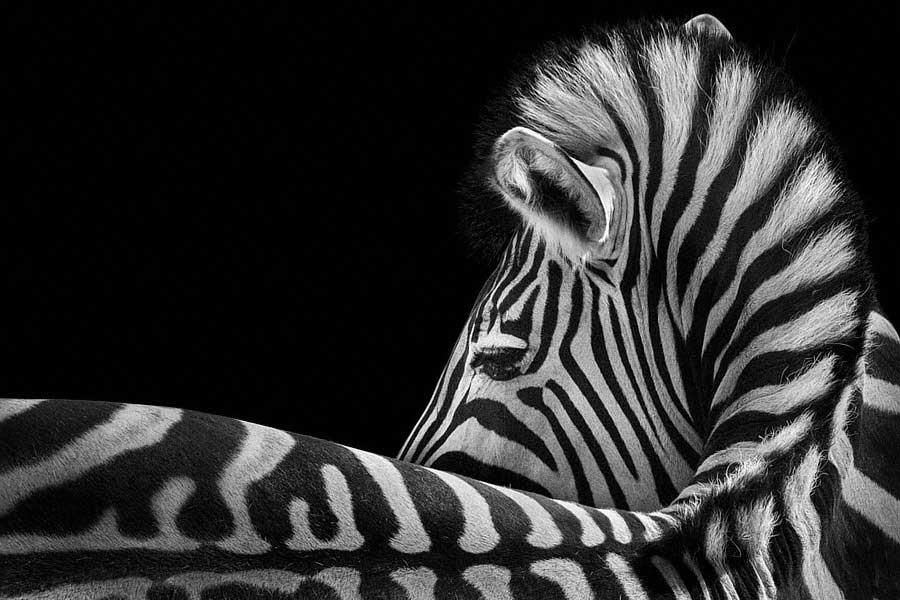 vortex photography of animals / Wolf Ademeit