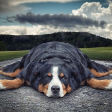 John Wilhelm / Lazy dog