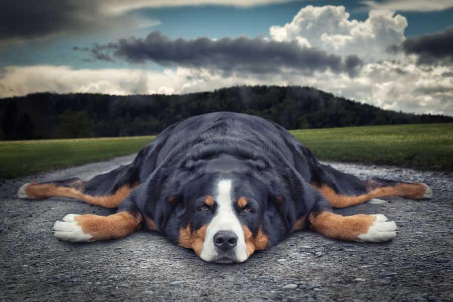John Wilhelm / Lazy dog