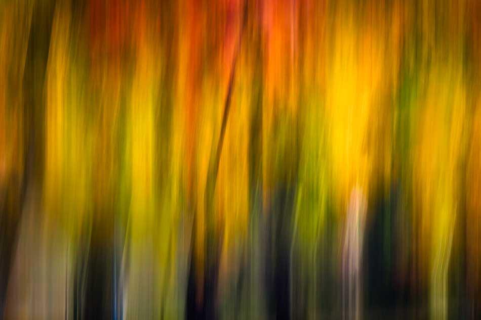 Fall_Light_2