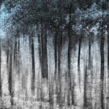 Ghost_Forest