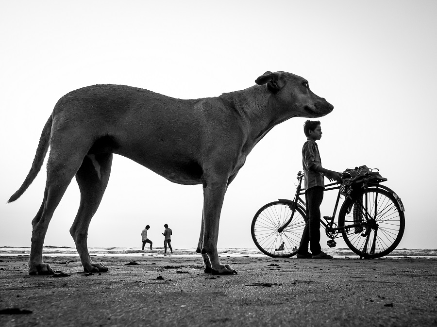Dog Story by Neenad Arul