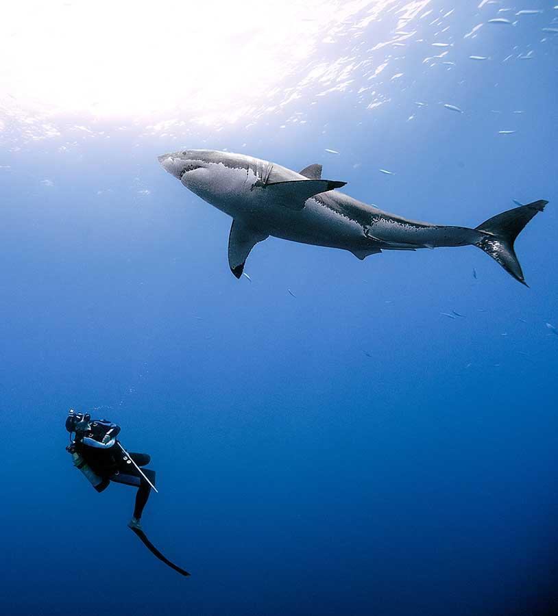 Daniel Botelho – Underwater Photography
