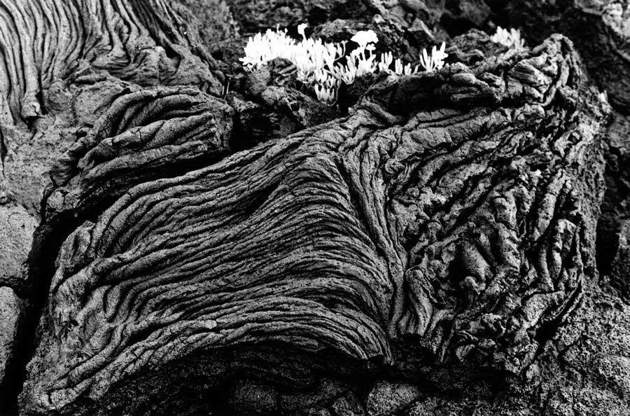 Lavas da ilha do Pico, 2015.