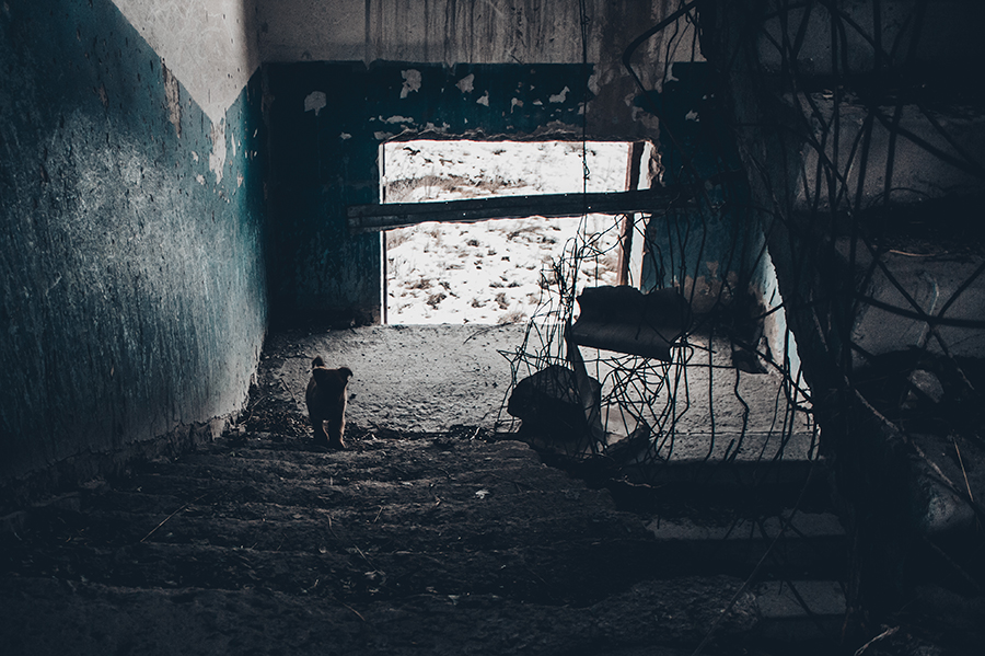 Gyumri Dog eaters building
