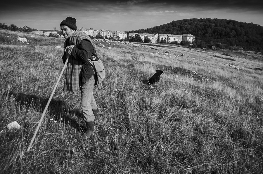 "Nicolae is tending sheep pastures around the neighborhood ""New Town"" in Anina"