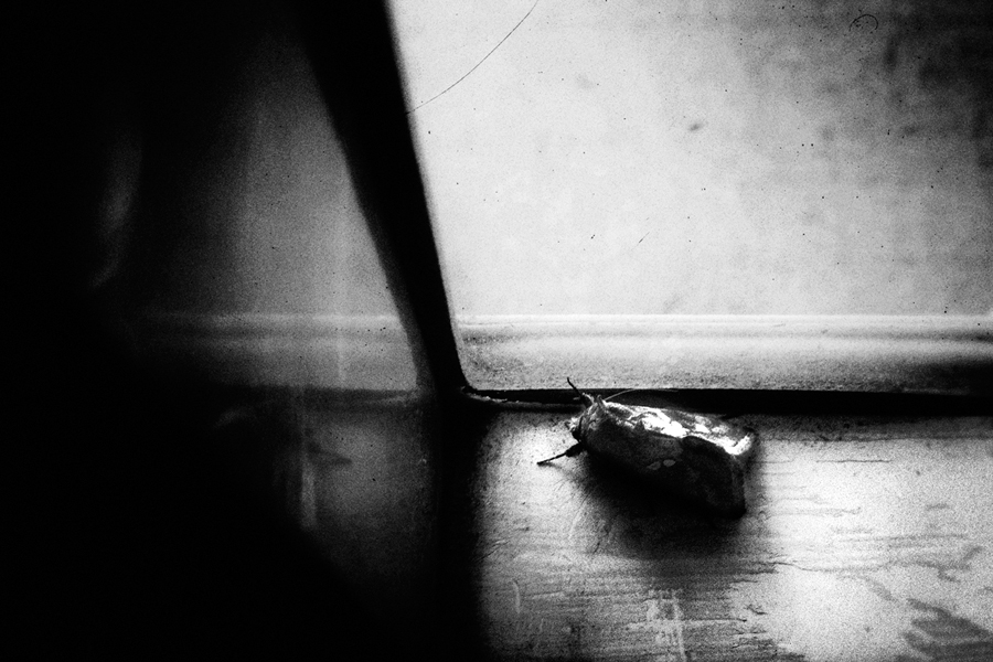 HUM_Nino Cannizzaro©_013