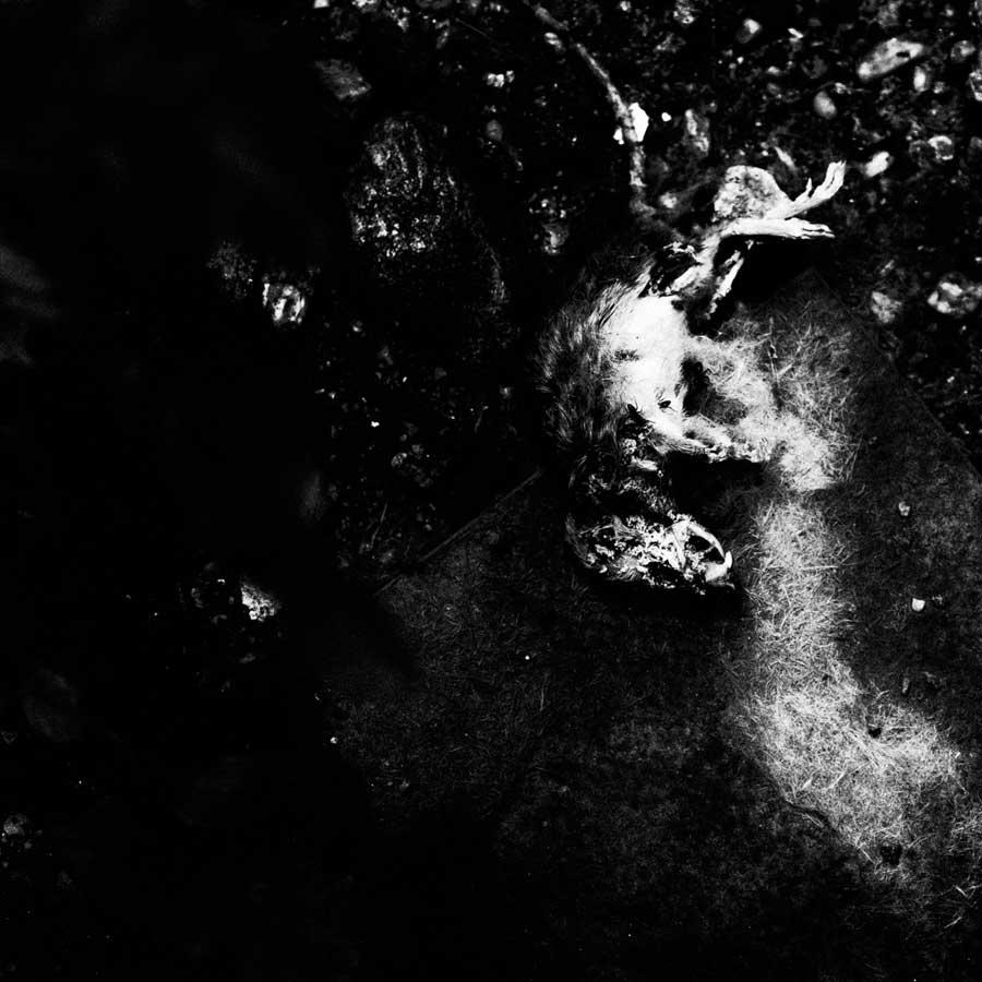 HUM_Nino Cannizzaro©_04