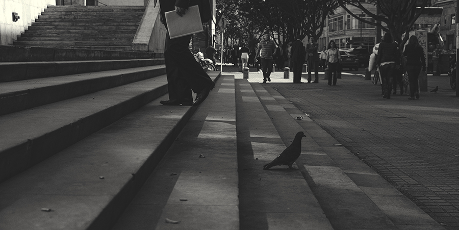 Man going to the job while a pigeon prepares to fly.