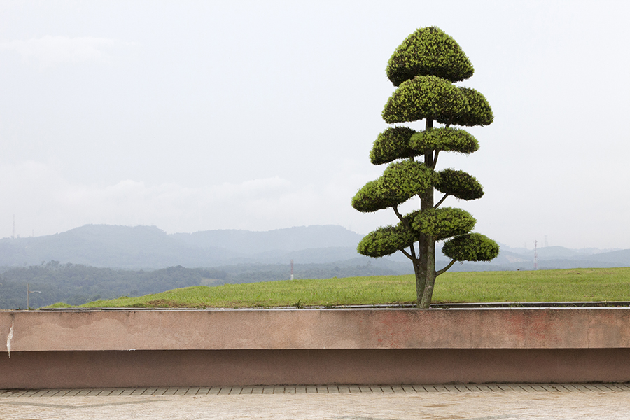 A manicured tree sits atop a hill in the planned city of Putrajaya. The city, Malaysia's administrative capital, was the brainchild of former Prime Minister Tun Dr Mahathir Mohammad.