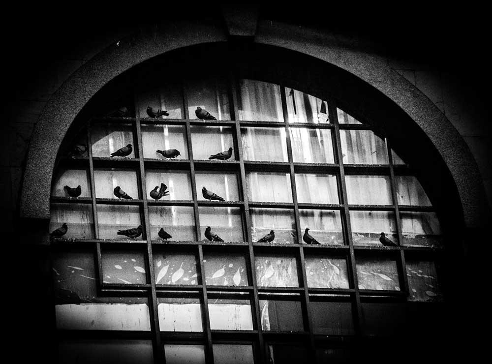 Pigeon Square4