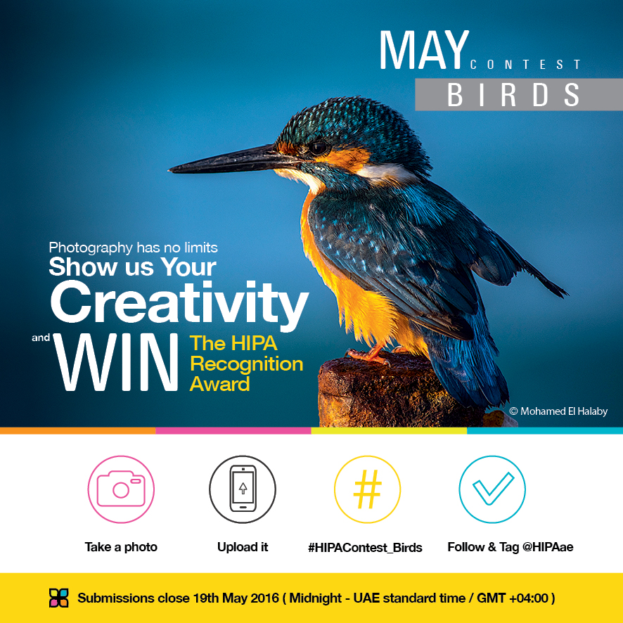 HIPA PHOTO CONTEST-Instagram -Birds