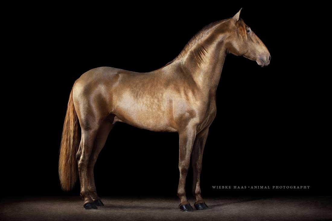 araber pferde namen
