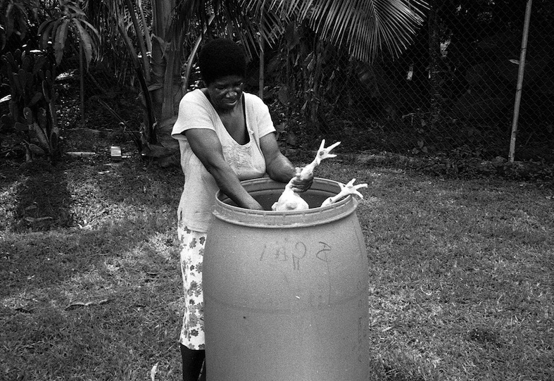 TITLE. The Long Hen. Jamaica 2008. Pogus Caesar:OOM Gallery Ar4chive