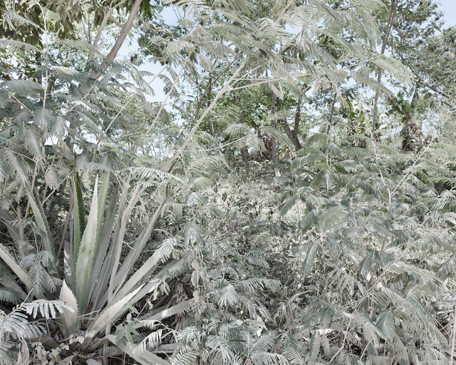 Plants by the road, covered with dust.