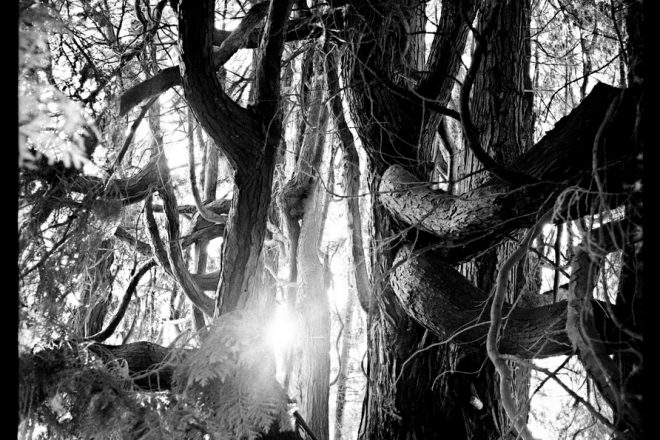 Oblique rays of light by Guillaume d´Hubert