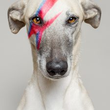 DoggyStardust