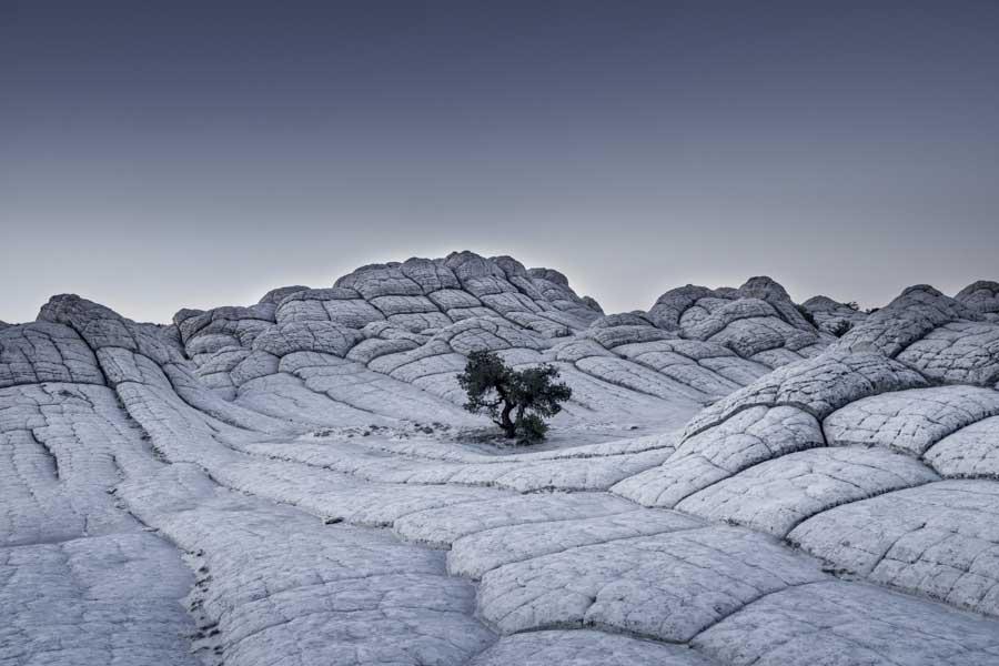 Lonely Tree (Arizona, USA 2015)