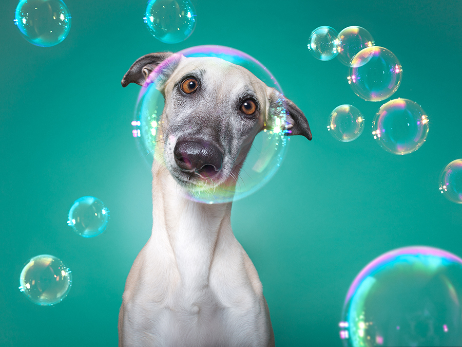 Nice Nosing You by Elke Vogelsang