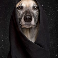 TheDogSideOfTheForce