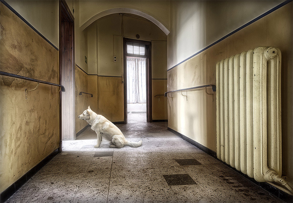Watchdog | Lost memories | Marcel van Balken