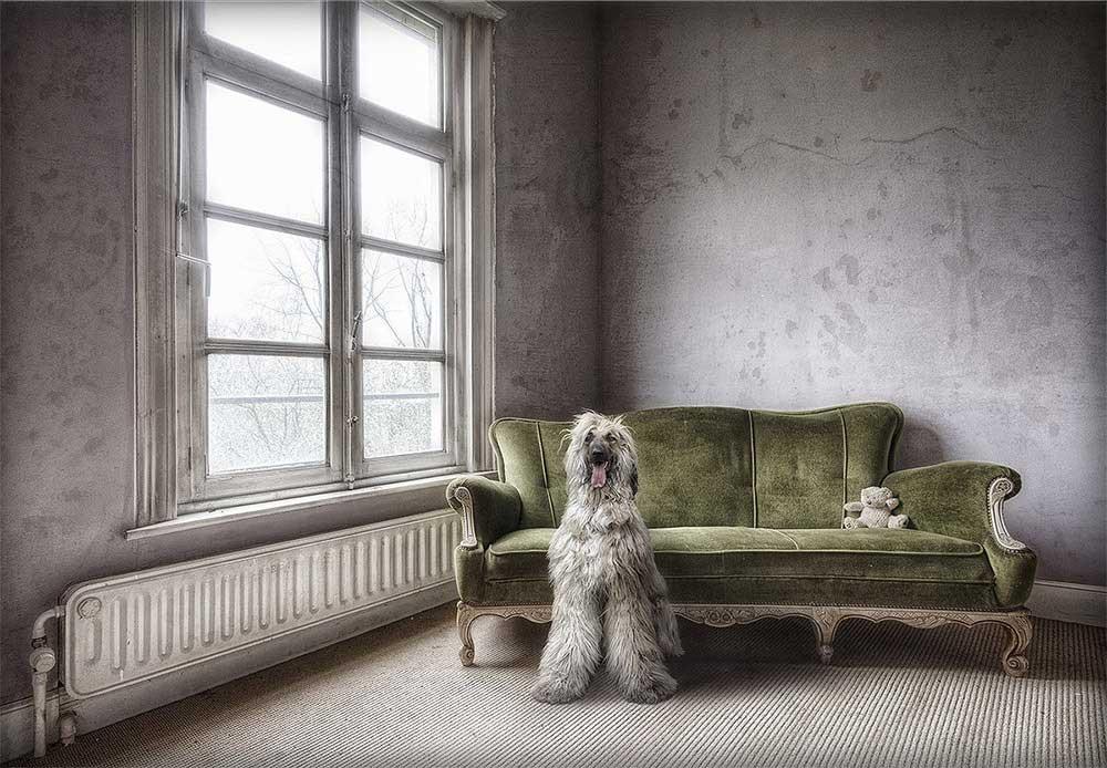 Dogfaith | Lost memories | Marcel van Balken