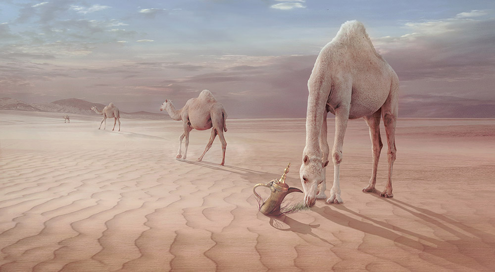 Camels Trip | Photo manipulation | Sulaiman Almawash