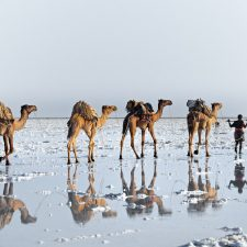 Reflections-in-Danakil