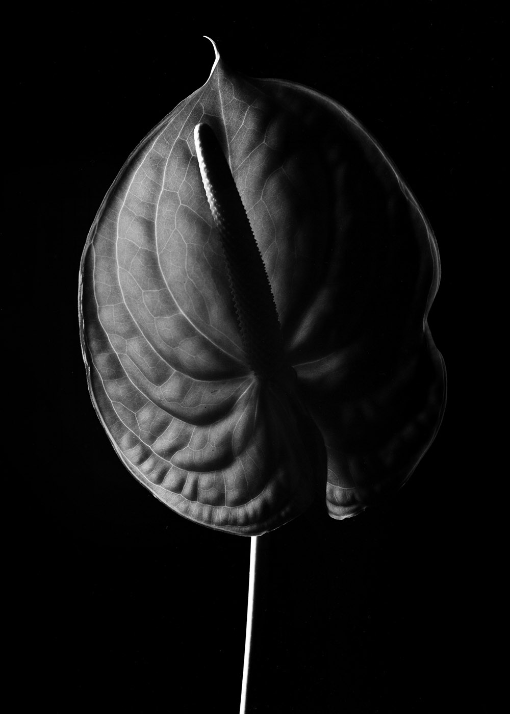 Herbarium | Guillaume d'Hubert