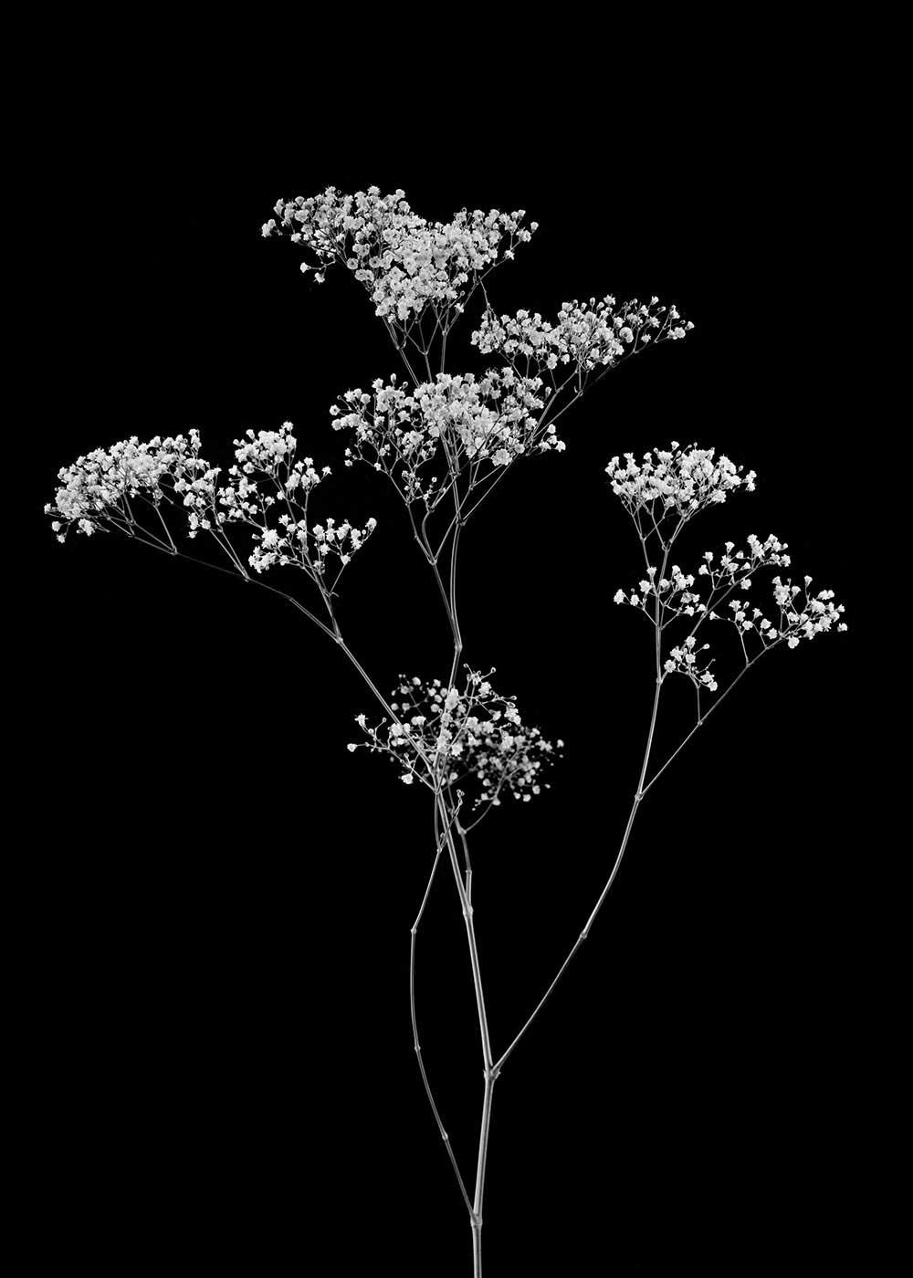guillaume_dhubert_herbarium_003