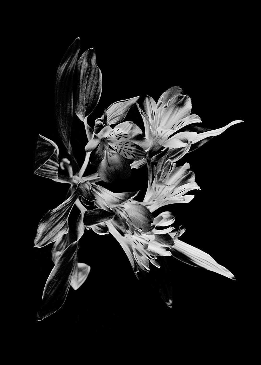 guillaume_dhubert_herbarium_005