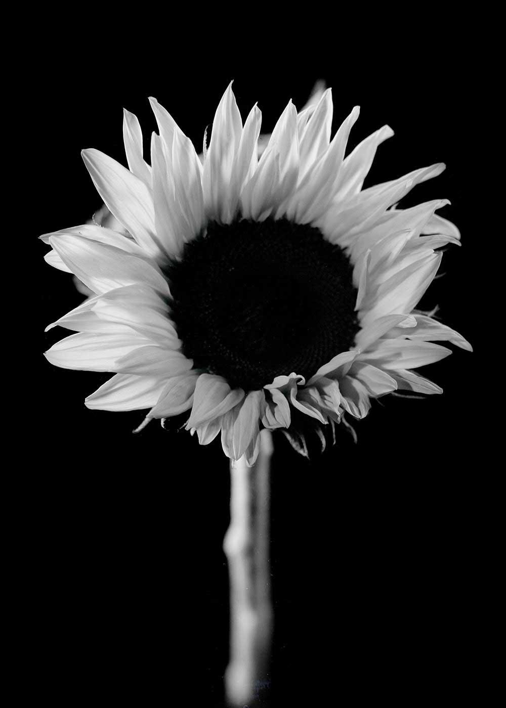 guillaume_dhubert_herbarium_006