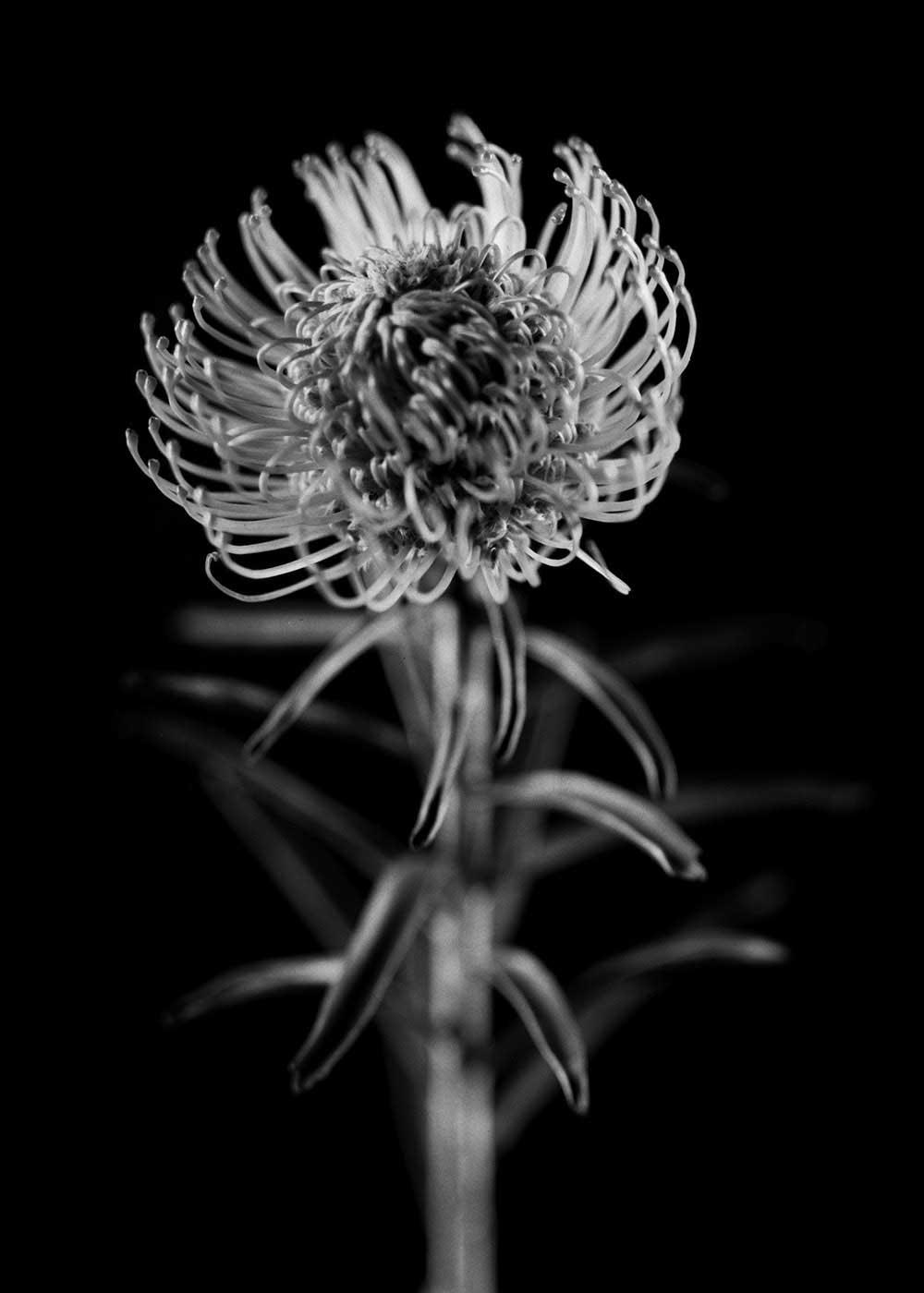 guillaume_dhubert_herbarium_008