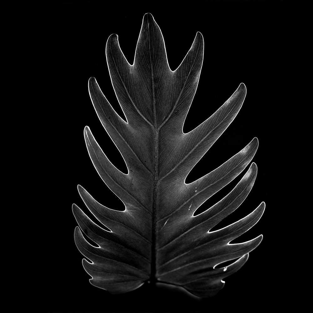 guillaume_dhubert_herbarium_009