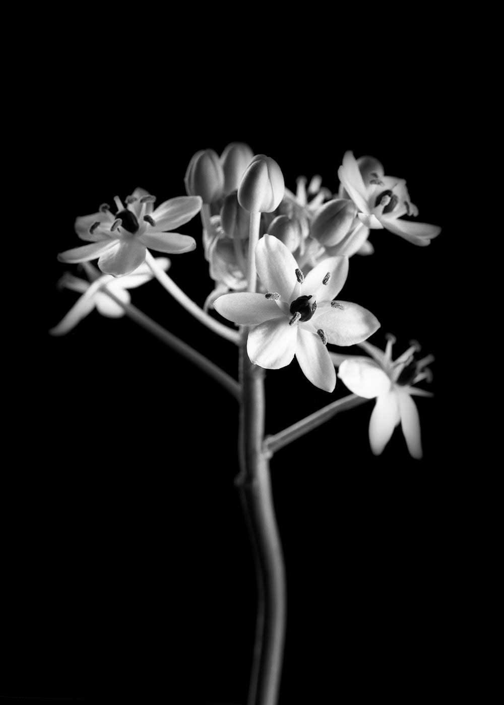 guillaume_dhubert_herbarium_010