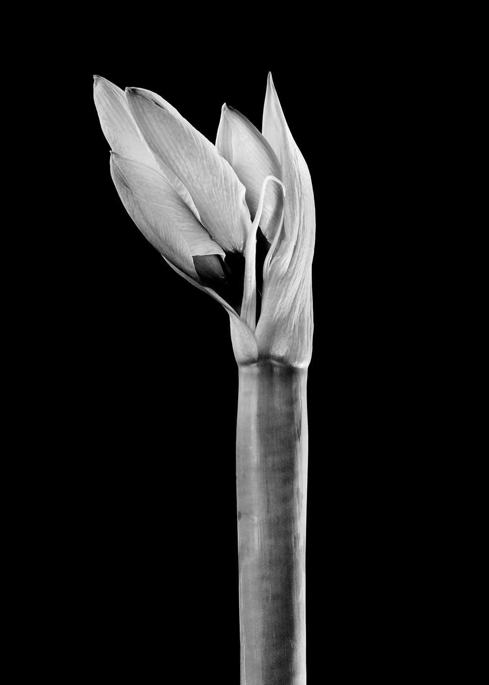 guillaume_dhubert_herbarium_012