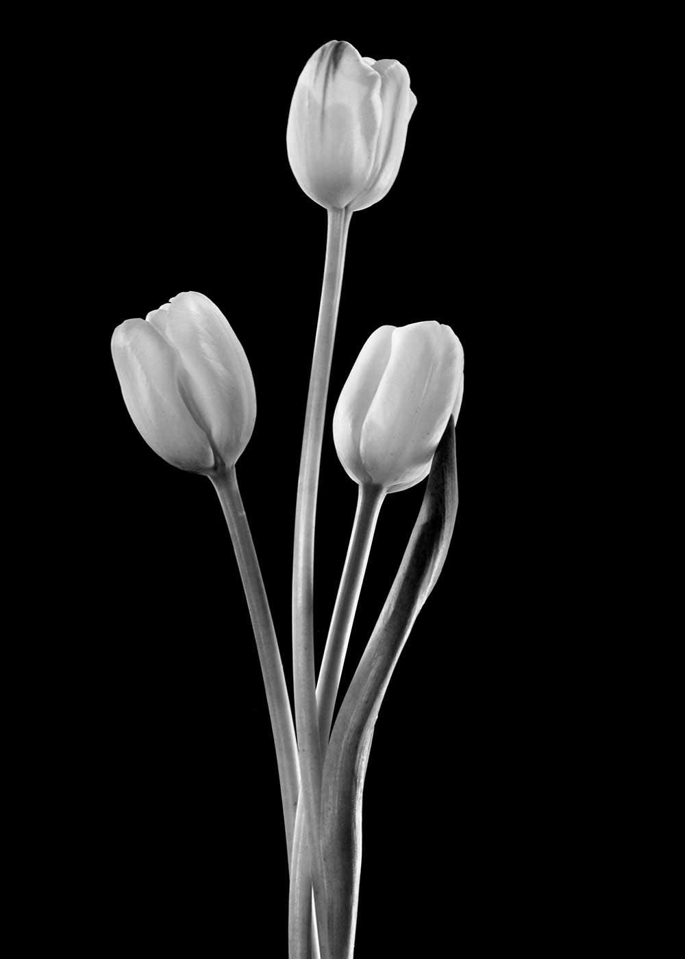 guillaume_dhubert_herbarium_014