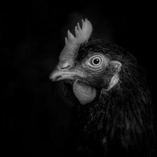 Mademoiselle Poulet